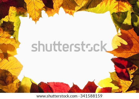 Border Frame of Colorful Autumn Leafs - Isolated on White - stock photo