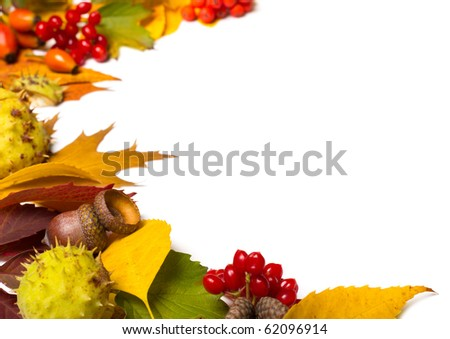 border from autumn elements isolated on white - stock photo