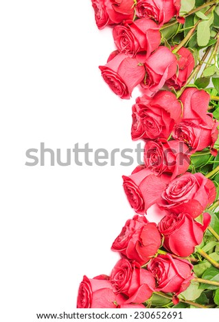 Border from beautiful pink roses isolated on white background - stock photo