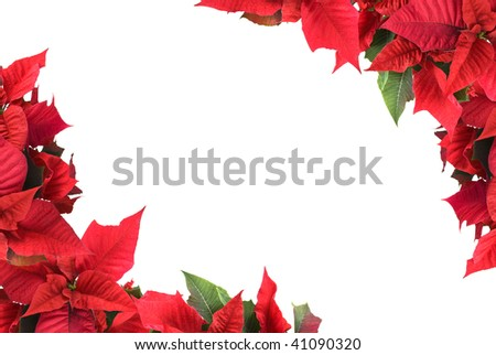 border from christmas flowers - stock photo
