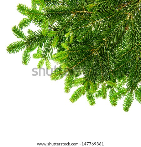 border from green christmas tree branch isolated on white background - stock photo