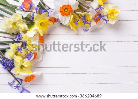 Border from yellow, orange and blue spring flowers  on white  painted wooden planks. Selective focus. Place for text.  - stock photo