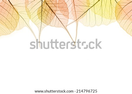 Border of Autumn color Leaves - natural cell structure, isolated on white - stock photo