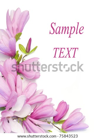 Border of beautiful magnolia flowers - stock photo