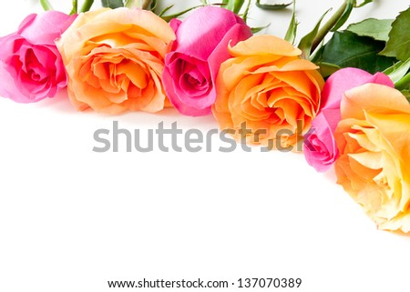 Border of beautiful orange and pink roses  on light background