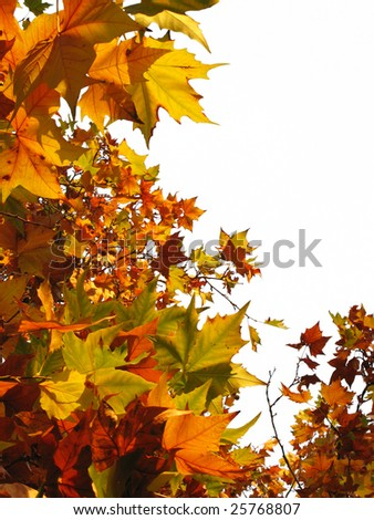 Border of bright autumn leaves in different shades - stock photo