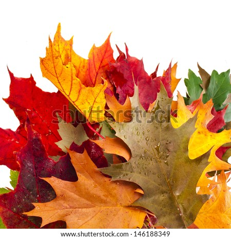 Border of colored falling leafs isolated on white background  - stock photo