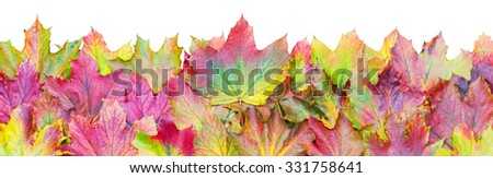 Border of colorful autumn leaves isolated over a white background - stock photo