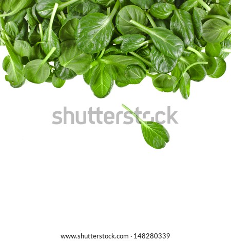 border of fresh green leaves spinach or pak choi isolated on a white background  - stock photo