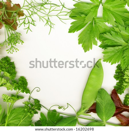 Border of fresh herbs, including dill, peas, basil, thyme, sage, parsley and oregano. - stock photo