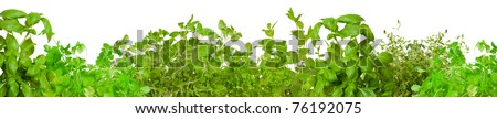 Border of fresh herbs, including  mint, basil, thyme,  parsley  oregano and coriander - stock photo