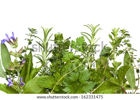 Border of fresh herbs, over white background.  Includes sage, mint, spearmint, rosemary, coriander, parsley, oregano and thyme. - stock photo