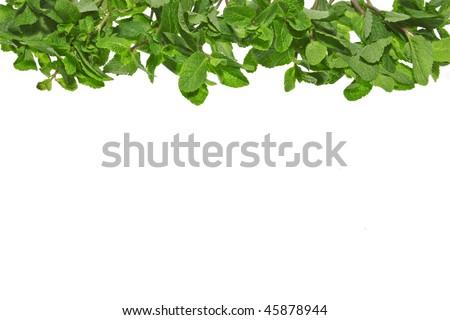 Peppermint Border Border of fresh mint leaves
