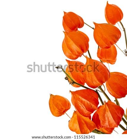 Page Borders Orange Border of Orange Inflorescence