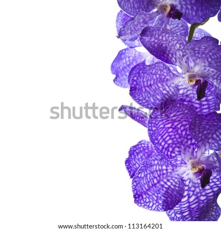 Border of orchid flower (vanda blue) isolated on white - stock photo