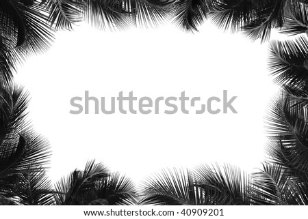 Border of palm tree - stock photo
