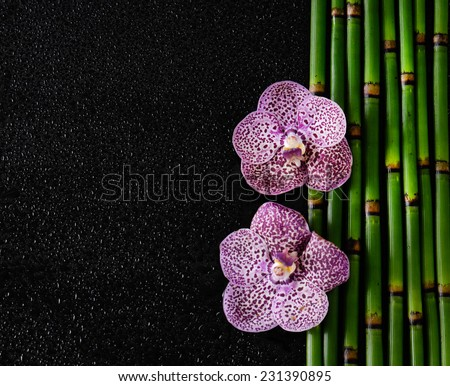 Border of pink orchid with bamboo grove �black background - stock photo
