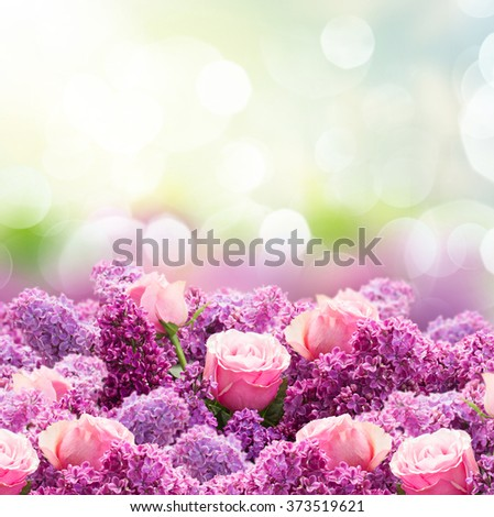 Border of purple Lilac flowers with pink roses in spring garden  - stock photo