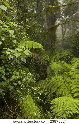 Border Range National Park, New South Wales, Australia - stock photo