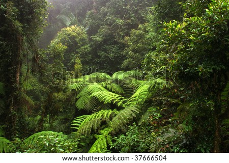 Border Ranges National Park, New South Wales (Australia) - stock photo