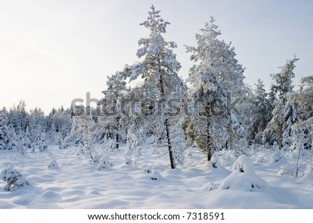 Boreal forest in wintertime - stock photo
