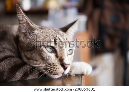 Bored cat - stock photo