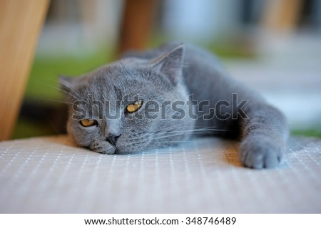 Bored cat relaxing on mattress, Gray cat do look tired - stock photo