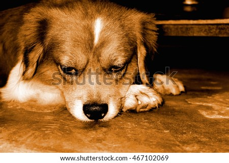 Boring : Dog's face concept, Bored emotion concept, Vintage tone