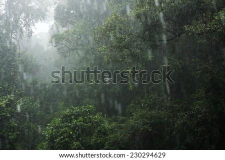 Borneo rainforest - stock photo