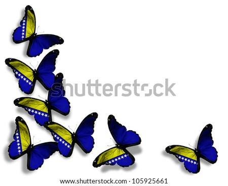 Bosnia and Herzegovina flag butterflies, isolated on white background - stock photo