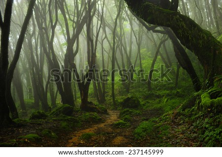 Bosque de Nepal - stock photo