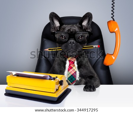 boss french bulldog dog    sitting on leather chair and desk as secretary or office worker with typewriter and pencil in mouth  - stock photo