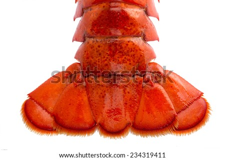 Boston lobster tail isolated on white - stock photo
