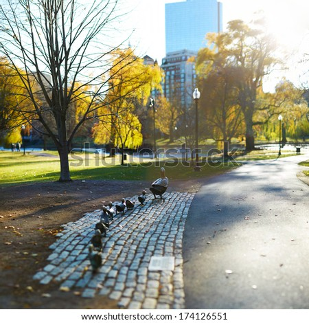 Boston Public Garden and the bronze statue of the ducklings  - stock photo