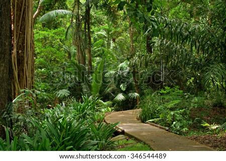Botanic Garden, Cairns, Queensland, Australia - stock photo