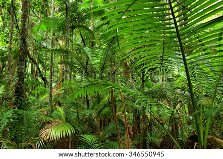 Botanic Garden, Cairns, Queensland, Australia - stock photo