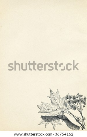 botanical engraving on vintage paper background - stock photo