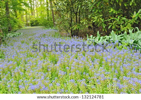 botanical garden ; Keukenhof gardens - stock photo