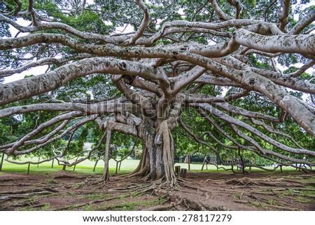 """botanical Garden of Peradeniya, Kandy,""""Royal Botanical Gardens, asias most beautiful  botanical Garden - stock photo"""