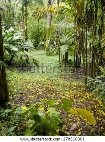 Botanical gardens in the talamanca mountains Costa Rica - stock photo