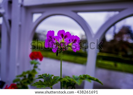 botanical gardens with plants and flowers - stock photo