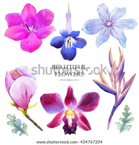 Botanical Illustration With Realistic Tropical Flowers And Leaves Watercolor Collection Of Magnolia Strelitzia