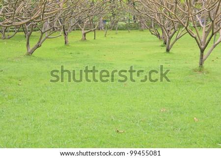botanical park of green grass. - stock photo