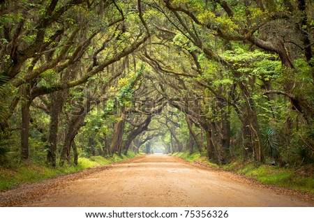 Botany Bay Plantation Spooky Dirt Road Creepy Marsh Oak Trees Tunnel with spanish moss on Edisto Island, SC - stock photo