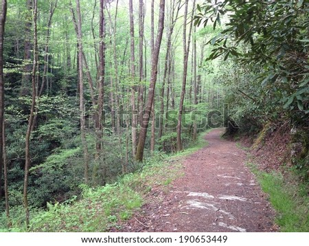 Bote Mountain trail in Great Smoky Mountains National Park - stock photo