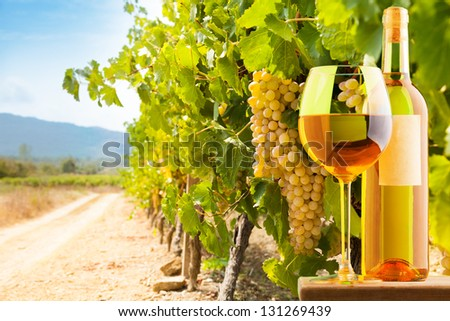 Bottle and glass of white wine on vineyard background - stock photo