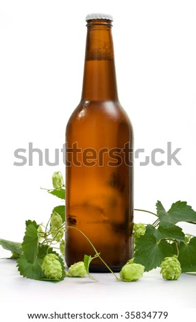 bottle of beer and branch of hop - stock photo