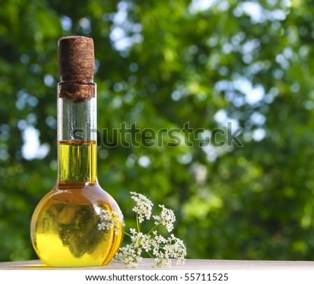 Bottle of essential oil on background of nature