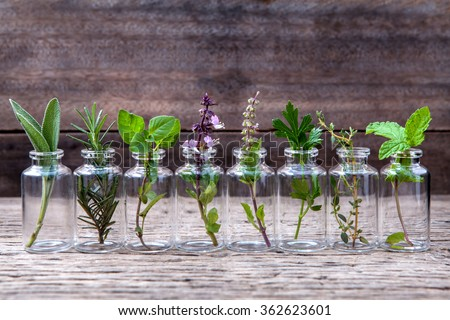Bottle of essential oil with herbs holy basil flower, basil flower,rosemary,oregano, sage,parsley ,thyme and mint set up on old wooden background . - stock photo