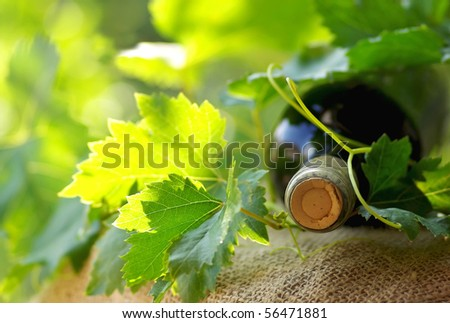 Bottle of red wine and leaves. - stock photo
